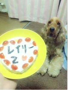 2西田写真 犬
